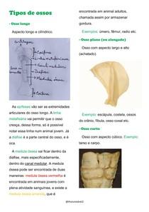 Tipos de ossos
