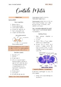 Controle Motor espinal