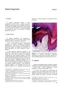 Sistema Tegumentar Anatomia