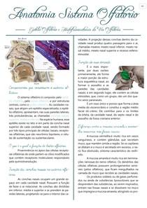 Anatomia Sistema Olfatório