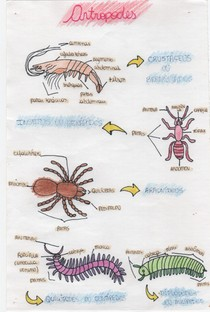 Artrópodes