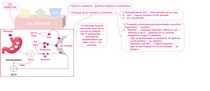 8 Estômago - anatomia part 2