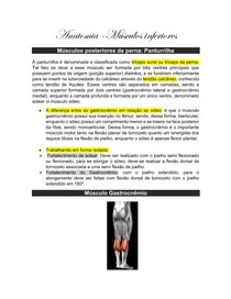 Anatomia musculos