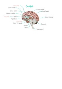 Mapa mental encefálo