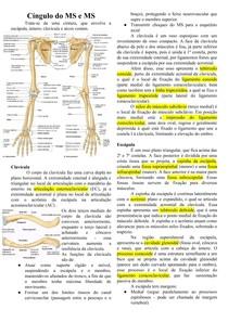 Anatomia  do Cíngulo do membro superior e Ombro