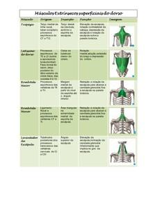 Resumo da anatomia do dorso