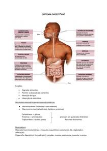 Resumo 04 - Sistema Digestório - Fisiologia