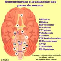 Pares de Nervos Cranianos