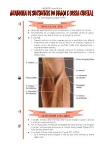 [04 05 2020] Anatomia de Superfície do Braço e Fossa Cubital