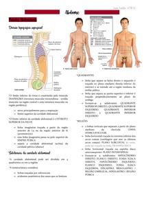 Anatomia - ABDOME