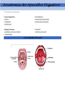 Anatomia do Aparelho Digestivo