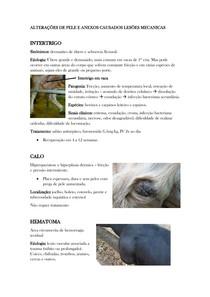 LESÕES MECÂNICAS NO TEGUMENTO DE GRANDES ANIMAIS