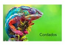 03_Cordados_compressed