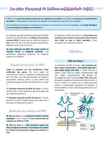 Complexo Principal de Histocompatibilidade - MHC