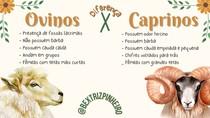 Diferenças entre ovinos e caprinos