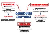 Mapa glândula salivares