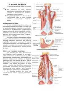 Anatomia dos Músculos do dorso