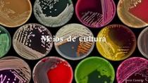 Resumo - Meios de cultura