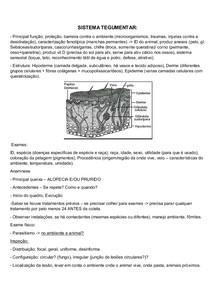 TEGUMENTO - Equinos