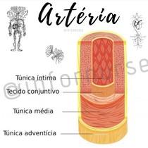 Estrutura Arterial