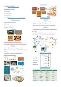 Fungos e micologias