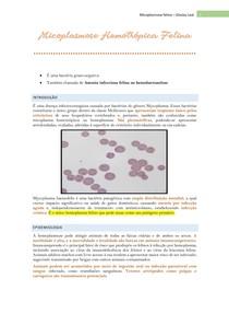 Micoplasmose Hemotrópica Felina