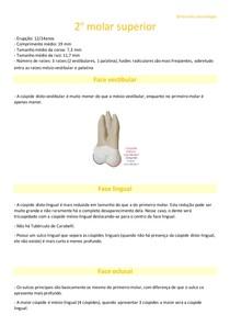 2º molar superior