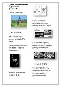 Criação, manejo e conservação de EMAS e AVESTRUZES