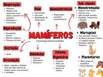 Mapa mental de Mamíferos