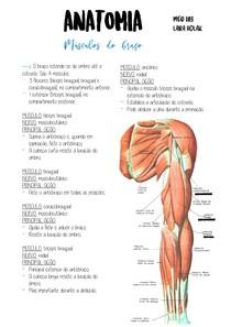 musculos do braço