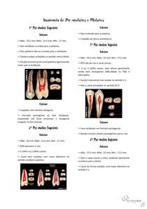 Anatomia de PM e Molares