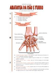 [06 05 2020] Anatomia da Mão e Punho