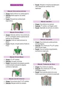 Músculos do Tórax