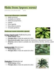 Plantas tóxicas (pequenos animais)