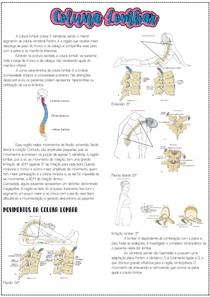 Coluna lombar