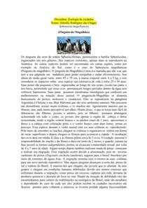 Zoologia de cordados- Pinguim de Magalhães- Spheniscus magellanicus