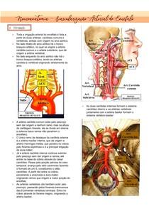 Neuroanatomia - vascularização arterial do cérebro