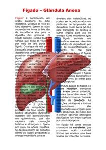 Fígado - Glândula anexa