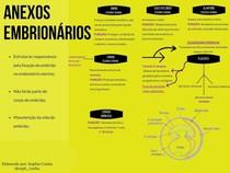 Mapa Conceitual ANEXOS EMBRIONÁRIOS