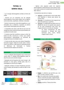 Tutoria 10 - sistema visual
