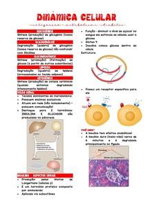 DC - Integração Metabólica e Diabetes