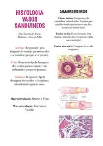 Histologia Vasos Sanguineos