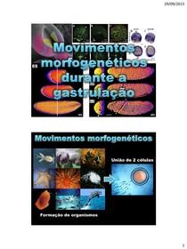 Movimentos morfogenéticos