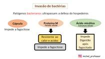 Invasão de bactérias e estrutura celular