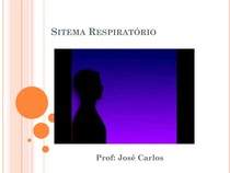Sistema Respiratório