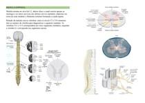 Anatomia macroscópica da medula espinhal e seus envoltórios