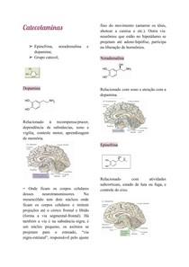Catecolaminas e aminoácidos transmissores