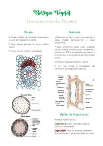Resumo Floema - Biologia Vegetal