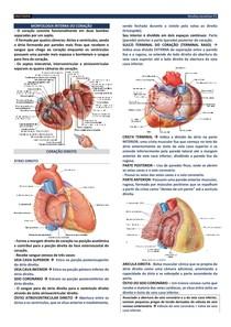 ANAT02 - Morfologia interna do coração