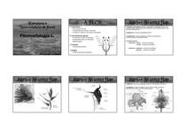 aula_2_estrutura_nomenclatura_flores